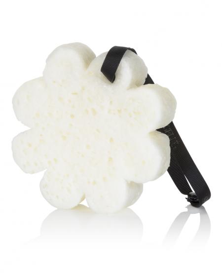 Spongelle Body Wash Infused Sponge –  Coconut Verbena, Gift Box