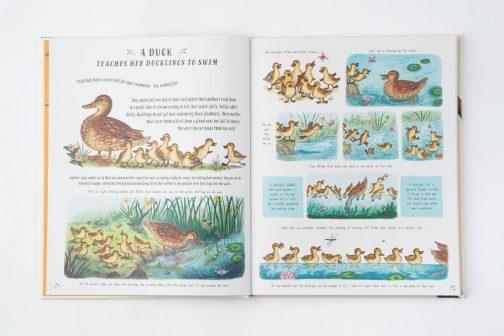 Slow Down Children's Nature book
