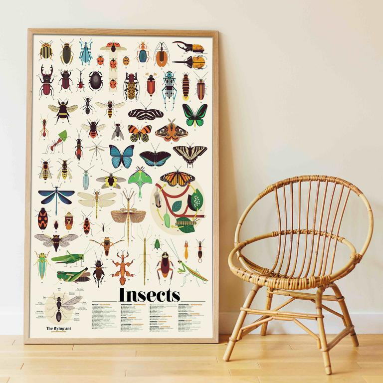 insect sticker poster
